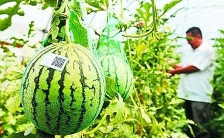 农产品溯源是什么?农产品溯源该怎么做?